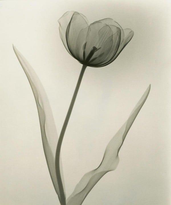1Tasker_Tulip_1931newweb3